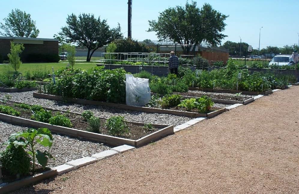 Garden plots and plants