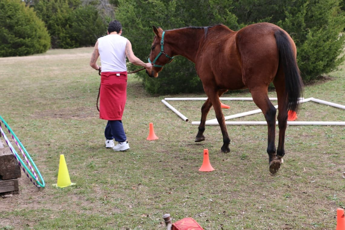 Horse equine physical therapy -  Man Leading Horse Through Course Smiling Woman At Horse Therapy Equine