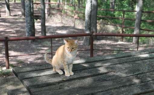 orange tabby kitty at ranch