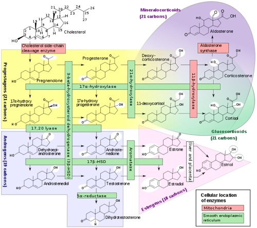 biosynthesis of steroids pdf