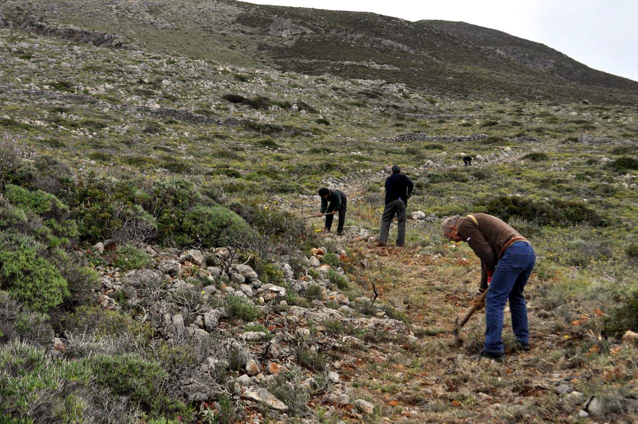Kythera trail clearing