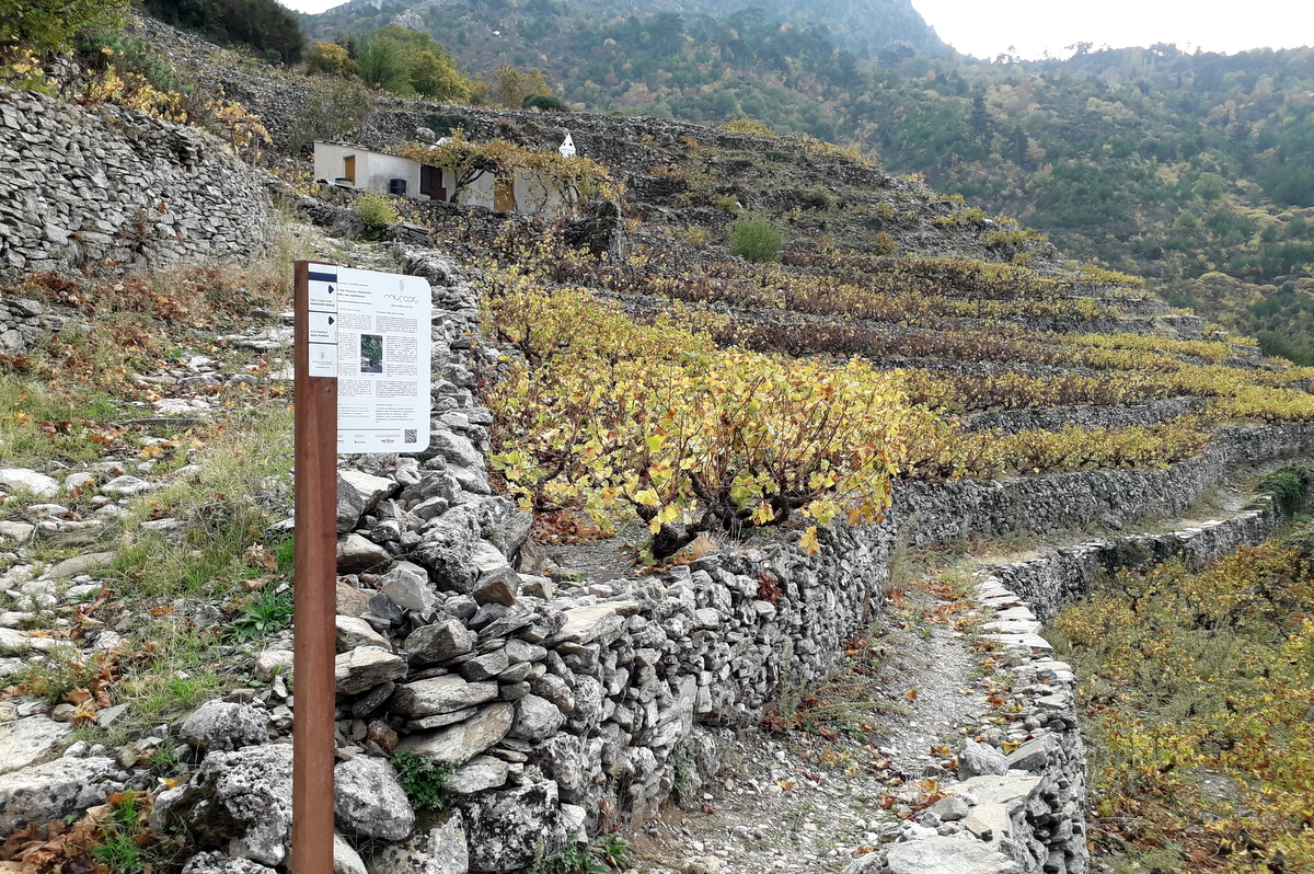 sign-posting path of the muscat vineyards