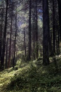Por los bosques del sur… de Albacete