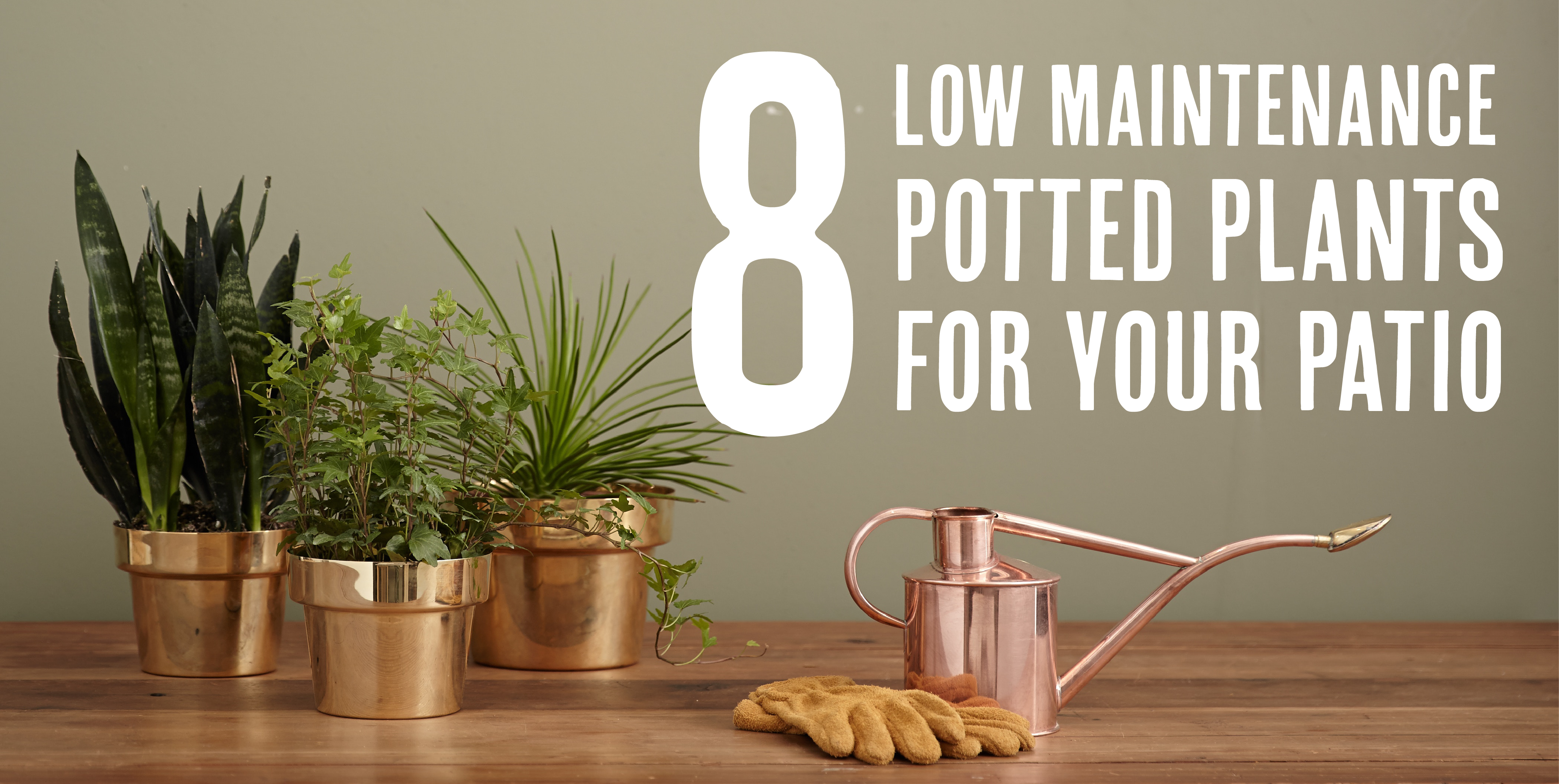 8 low maintenance potted plants for