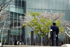 The cherry blossom police, Tokyo Midtown