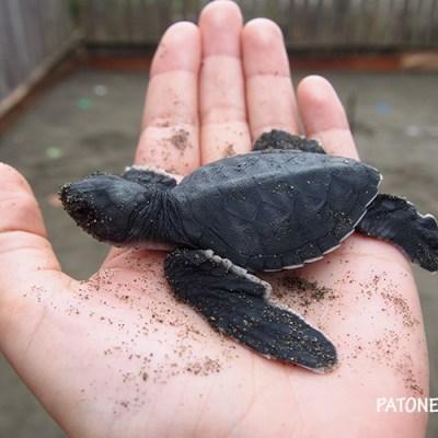 Tortugas marinas del Pacífico (o el día que casi pierdo un pie)