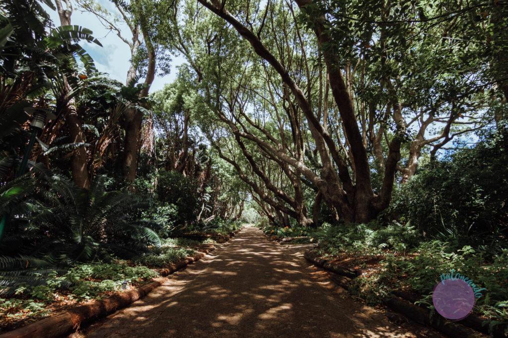 Que ver en ciudad del cabo - guia - Kirstenbosch garden - Patoneando blog de viajes (14)