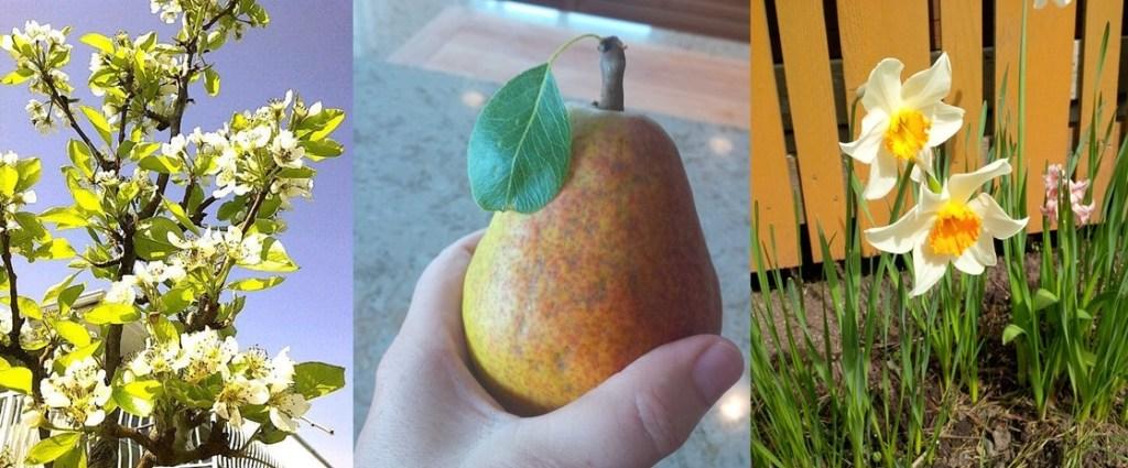 Spring Pear
