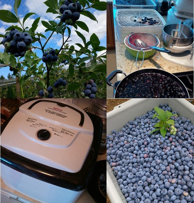 Berry Dehydrator Collage