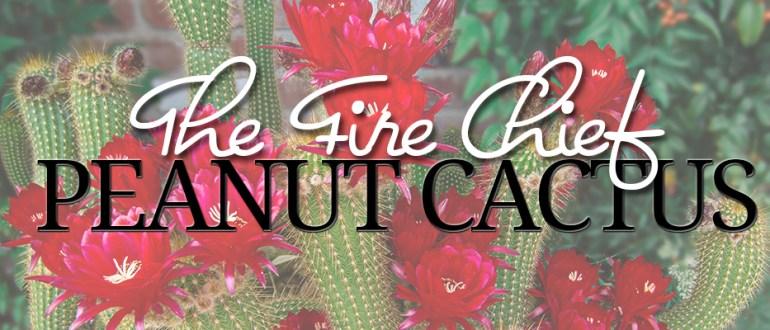 peanut cactus fire chief hybrid