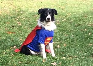 Superman Willie 2