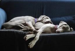 Brodie & Sally