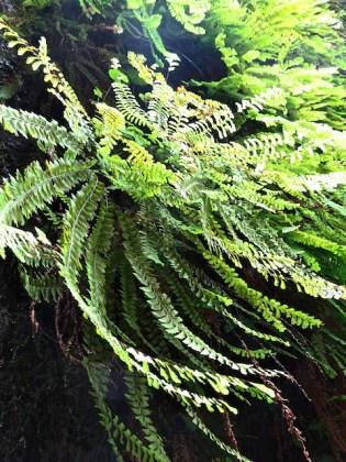 fern-close-up-fern-valley-2016