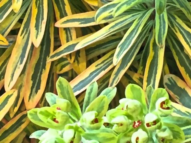 Leaves Olbrich 3-17