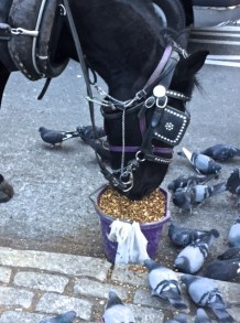 horse and pigeons