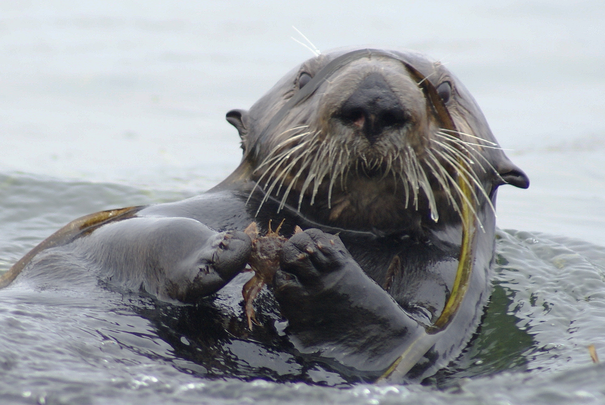 Saving sea otters: Your call to action