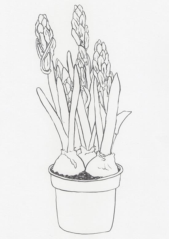 Naturstudie Hyazinthe 3 Tuschestift