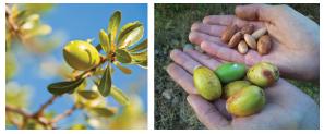semente de argan - Moroccanoil Máscara Hidratante e Glimmer Shine Spray