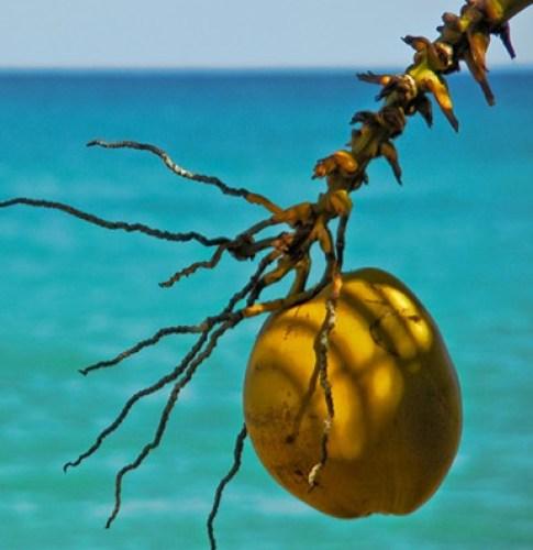 coco mar interna - Água de Coco: A Bebida do Verão!