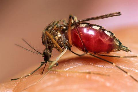 dengue11 - Você Já Teve Dengue?