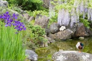 PL20050430-Hakone-Gardens-2819