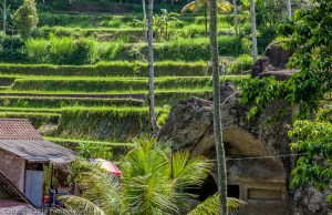 Terraced fields in Bali
