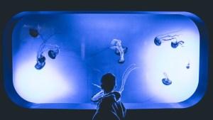 Boy with transparent jellyfish