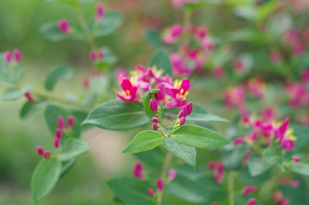 unidentified flowering bush