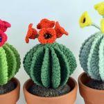Cactus redondos con flores amigurumi