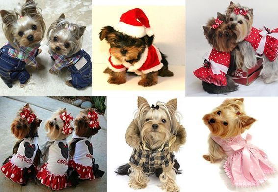 Patrones de ropa para mascotas