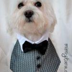 Patrón y DIY de chaleco de smoking para perro
