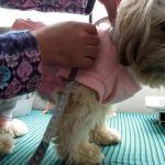 Como sacar las medidas a tus mascotas
