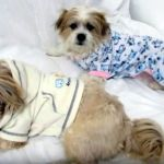 Reciclar ropa de bebé en ropita para perros o mascotas