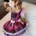 Vestidos para mascotas con patrón