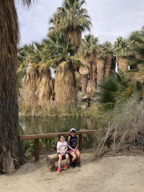 Thousand Palms Oasis Preserve #oasis #deserthike #palmsprings #coachellavalleypreserve #thousandpalmsoasispreserve