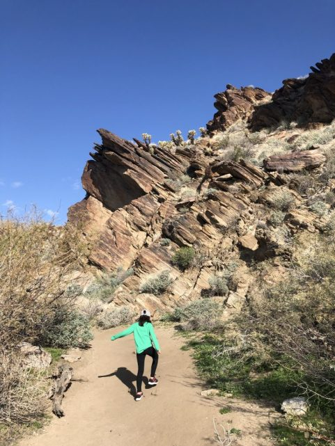 Andreas Canyon hike #palmsprings #hikepalmsprings #andreascanyon #hikewithkids