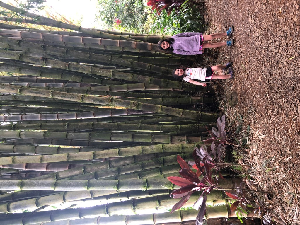 Bamboo Alley - Garden of Eden - Road to Hana - Maui - Hawaii #roadtohana #maui #bamboo #hikehawaii