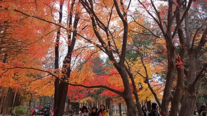 ทัวร์ใบไหม้เปลี่ยนสี | เที่ยวเกาหลี วันสอง - เกาะนามิ