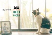 รีวิว The Travelling Cat Chronicles | ผม แมว และการเดินทางของเรา