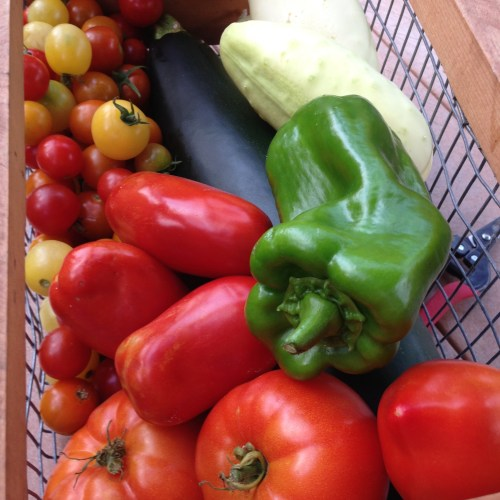 Todays Harvest Basket 8:1:2014II
