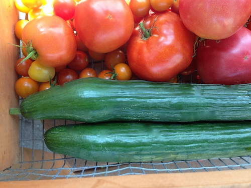 Juicy cucumbers and tomatoes.