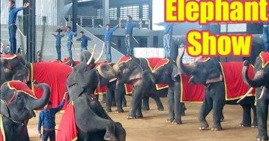 PATTAYA ELEPHANT SHOW FULL VIDEO | Thailand's Elephants Got The Talent