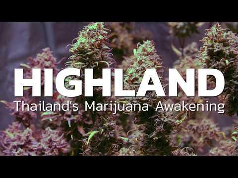 Thailand legalizing Marijuana   HIGHLAND trailer   Coconuts TV on Netflix