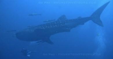 Stir Pro – Scuba Diving in Phuket, Thailand