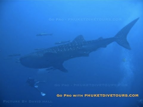 Stir Pro – Scuba Diving in Phuket, Thailand