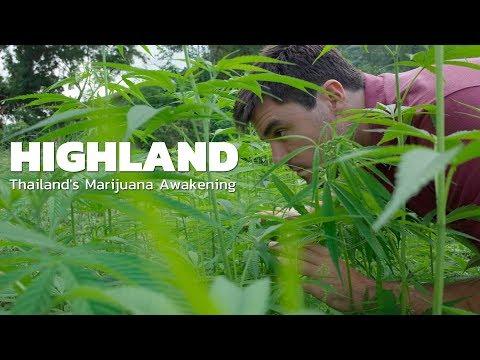 Thailand's Marijuana Legalization Glide | HIGHLAND | Episode 1 (Origins) Excerpt