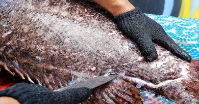 Thai Avenue Meals – $1500 GIANT GROUPER Bangkok Seafood Thailand
