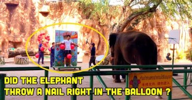 Elephant Indicate in Sriracha Tiger Zoo Pattaya Thailand