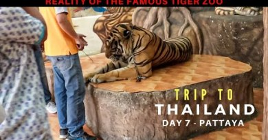 The Truth of Wisely-known  Tiger Zoo in Pattaya | The Sanctuary of Truth | Saurabh Nashit