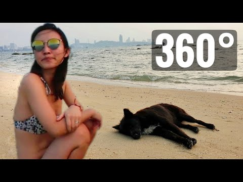 VR Video 360° Ocean Beach Dog & Bikini Woman Pattaya Thailand Immersive 360 stage 4K